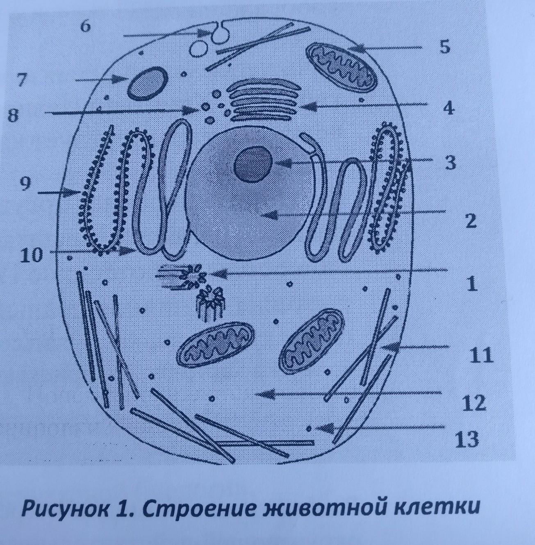 схема строение клетки картинки