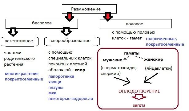 Схема как размножаются растения 656