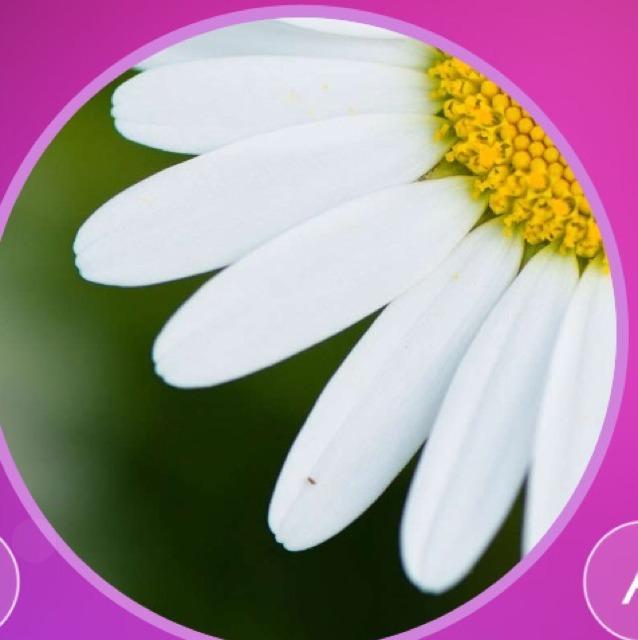 Цветы из 8 букв с