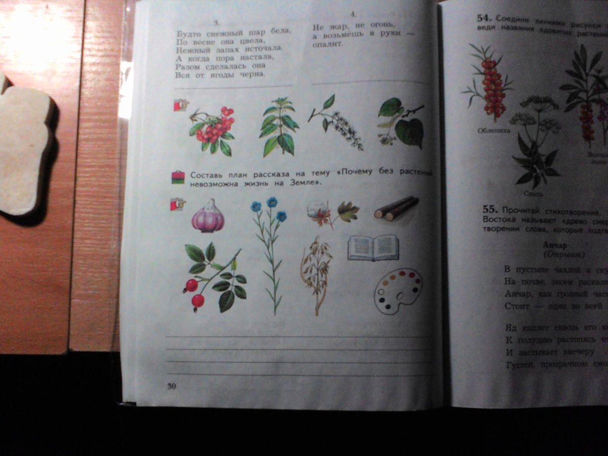 Выращивание ноготков из семян 436