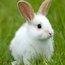 кроликяна