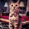 Meow14
