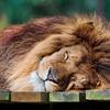 LION1357