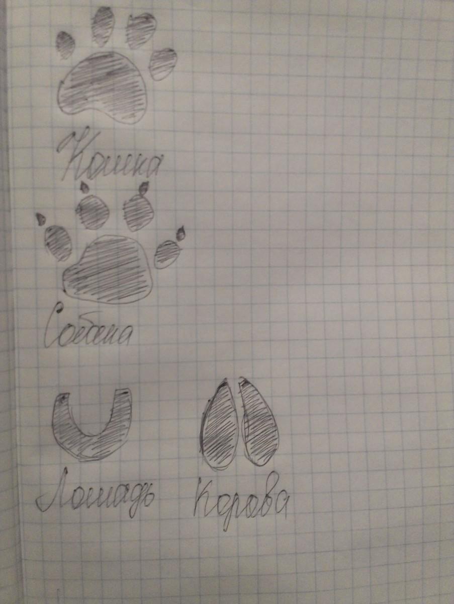 кошки картинки собаки следов и