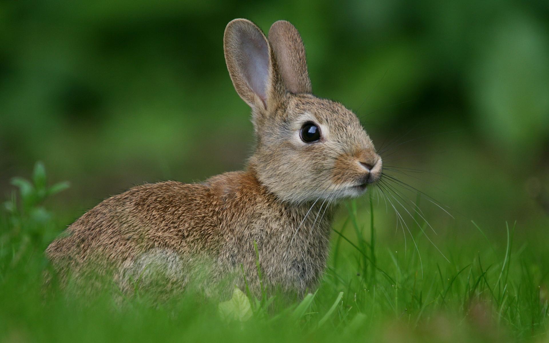 Доклад про зайца на английском языке с переводом 5675