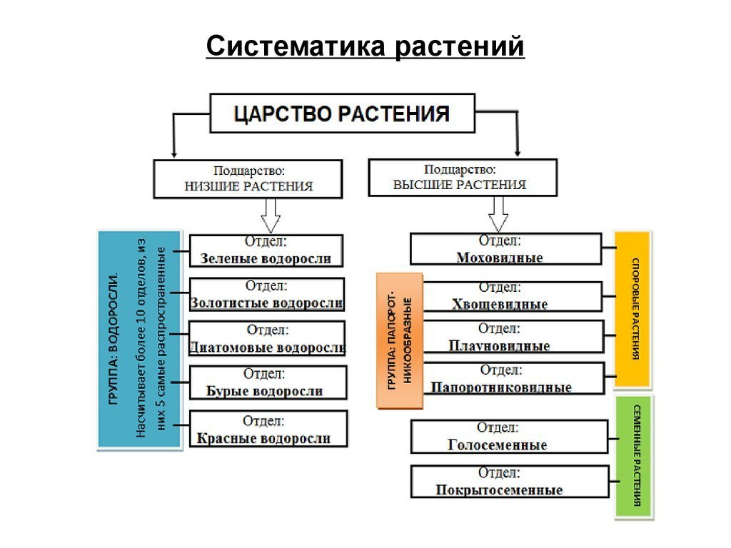 Систематика растений ее значение для ботаники доклад 9218