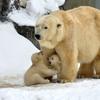 bearcab