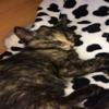 cat123089
