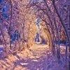 Снегиринка