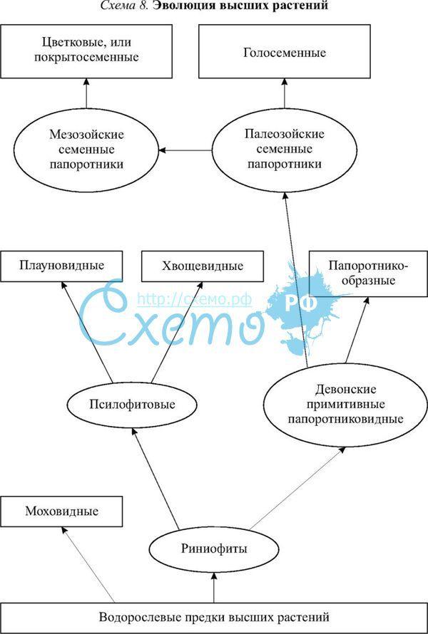 Высших растений схема