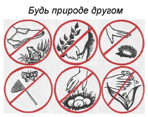 Как нарисовать охрану природы картинки