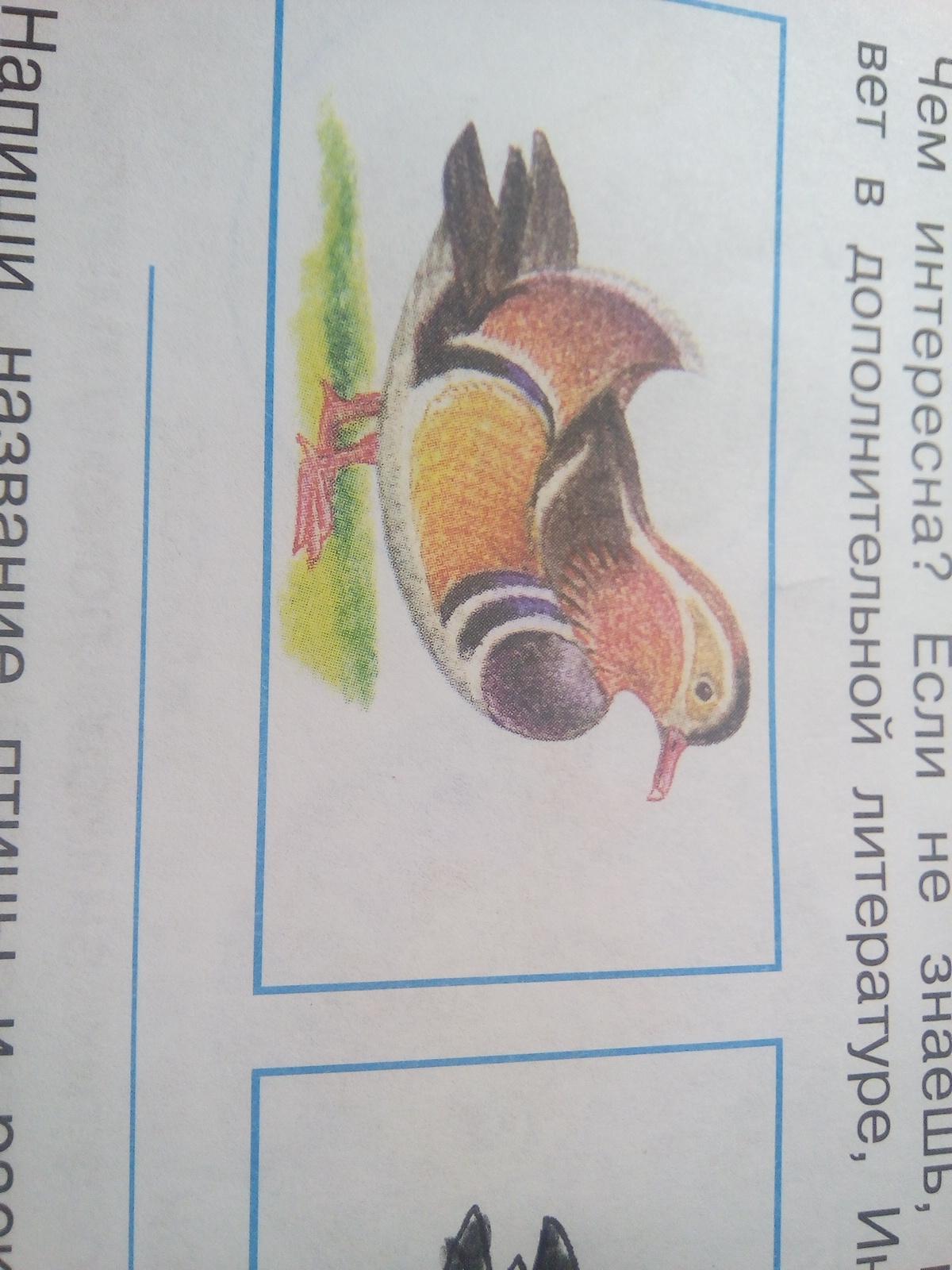 Как называется птица???!??!?!?!?!!!!??!?!!!