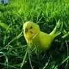 parrots546