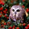owl2033