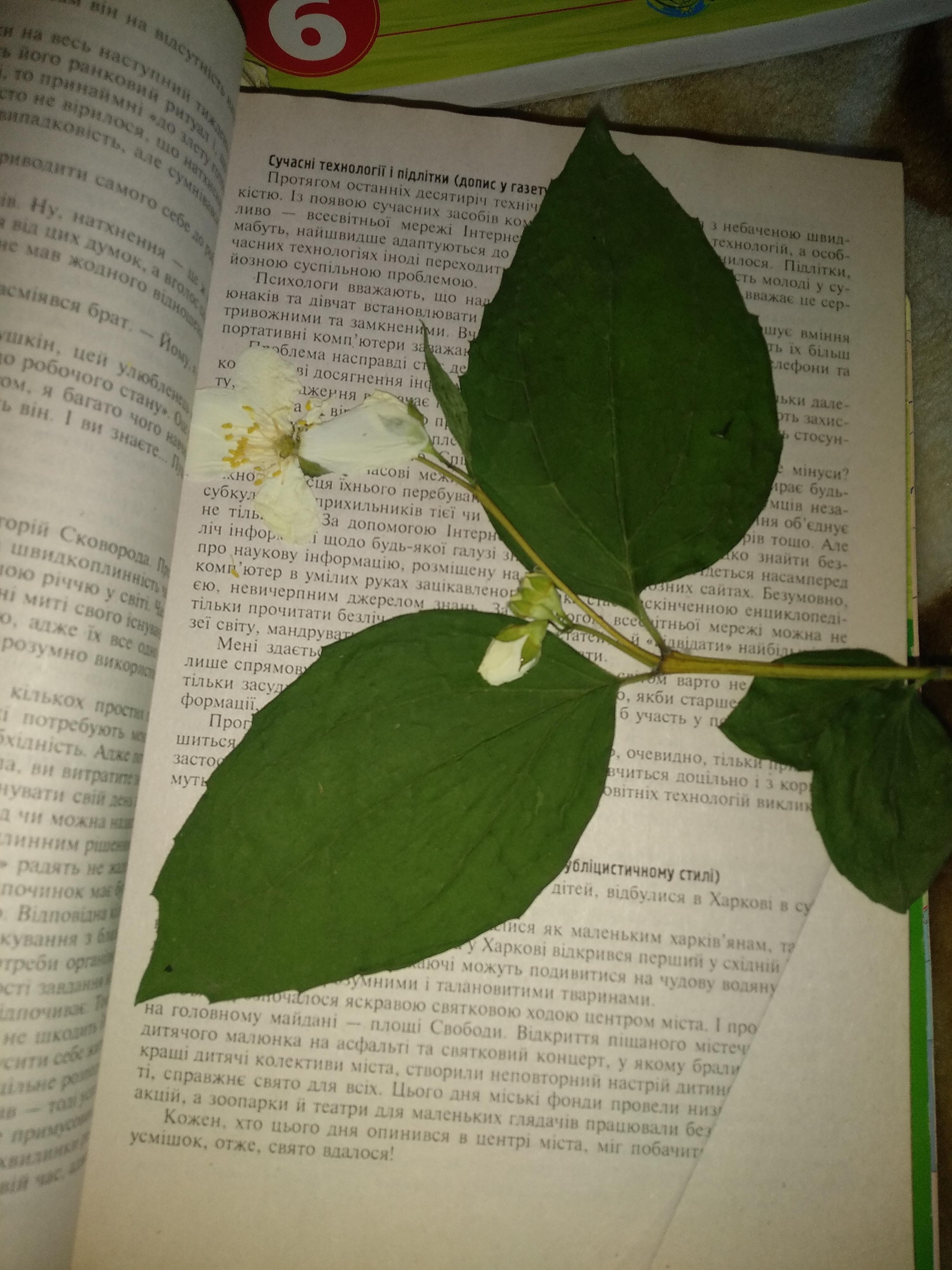 Что это за растение? СРОЧНО!Научные названия!