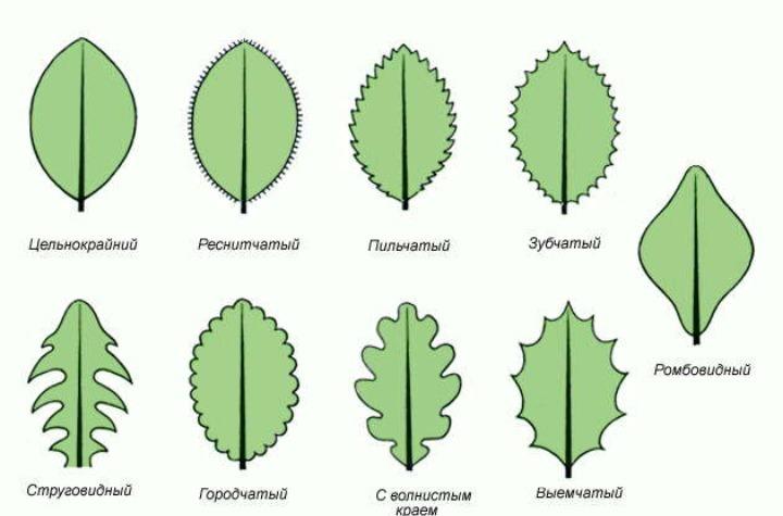 Примеры в картинках листок
