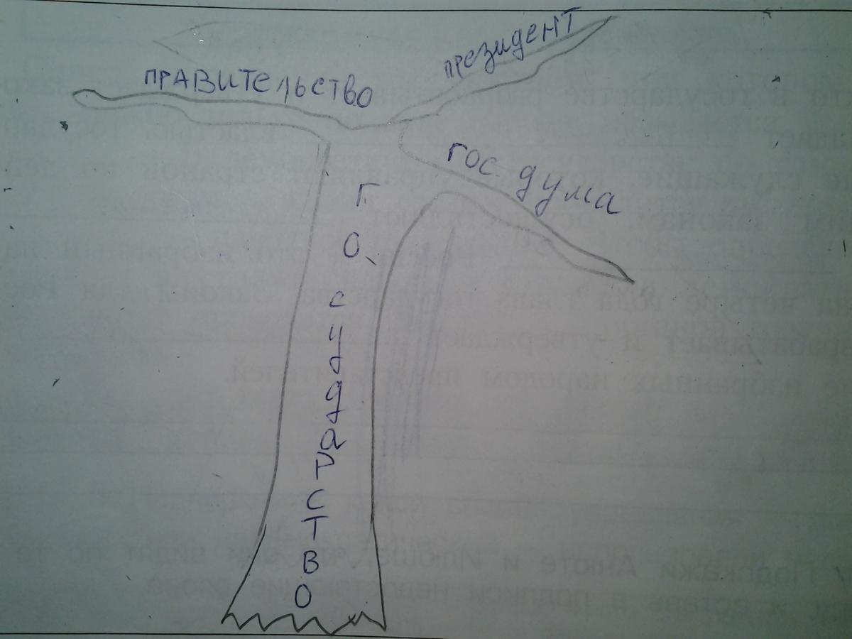 Схема дерева власти с ветвями 425
