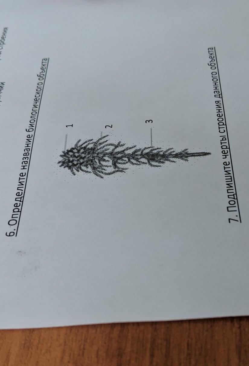 Помогите пожалуйста по биологии тест надо сделать