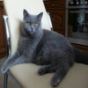 Котик2006768