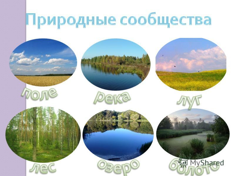 в картинке сообщество природное