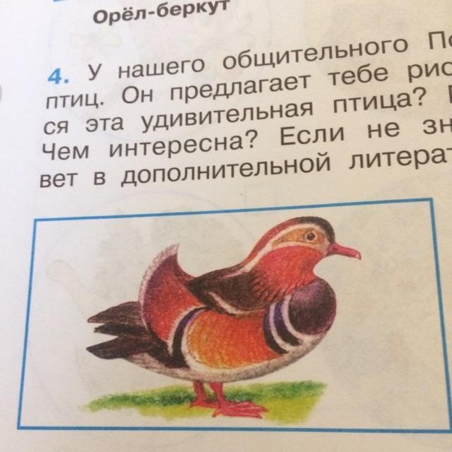 Кто это птица? Ото не могу догадаться
