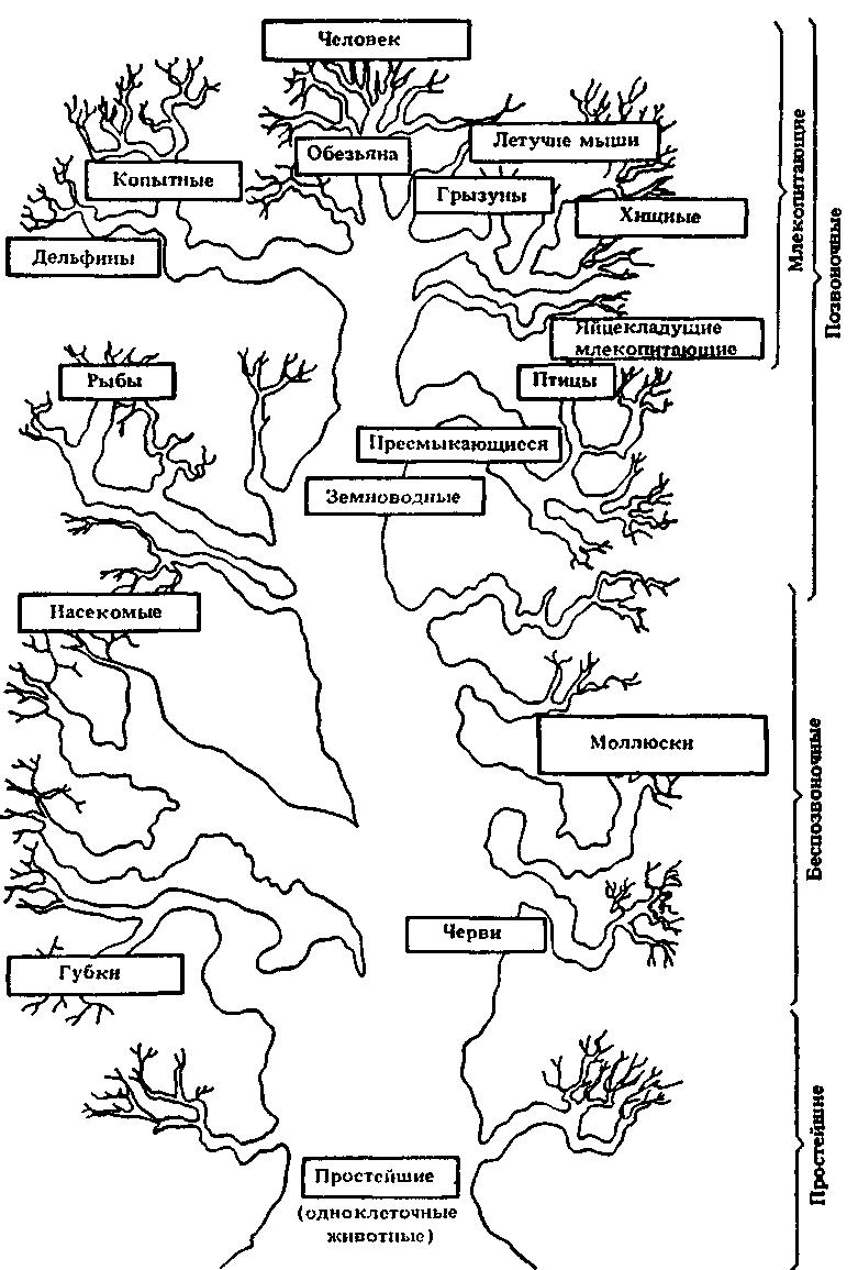 Схема дерева власти с ветвями 926