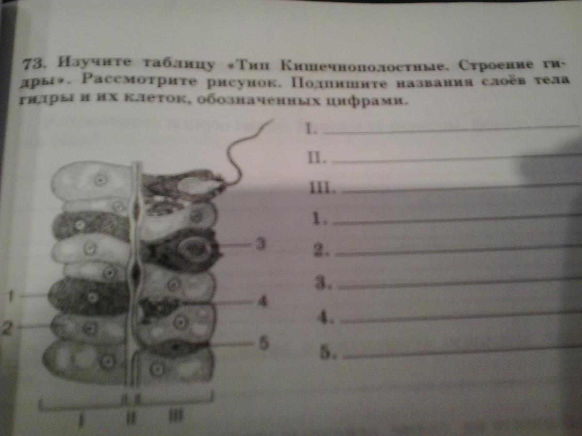 типы клеток гидры таблица