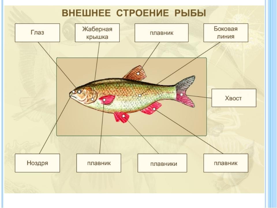 заготовка из чего состоит рыба схема картинки забавные листики, трогательные