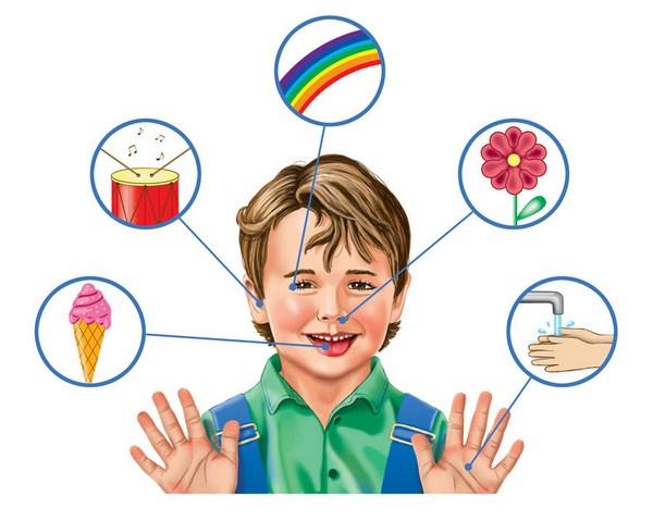 органы чувств для детей картинки