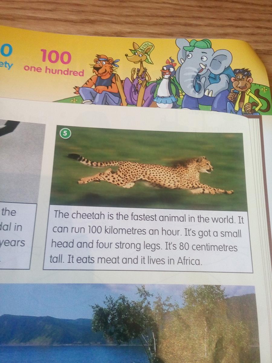 Рассказ о диком животном на английском языке 5 класс