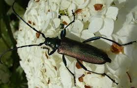 Стволоеды - жуки, которые едят стволу деревьев.<br>Это жук-