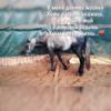 Horse2001