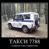 tiget12