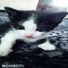 Кити105
