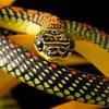 Snake505