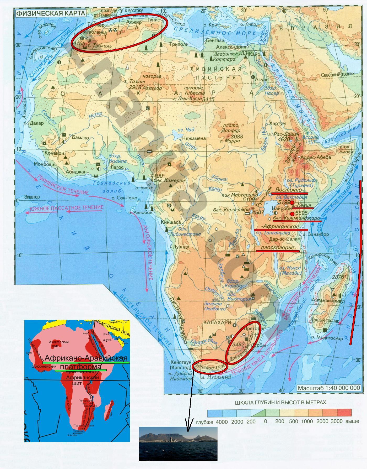 по площади материка африки занимает ответы