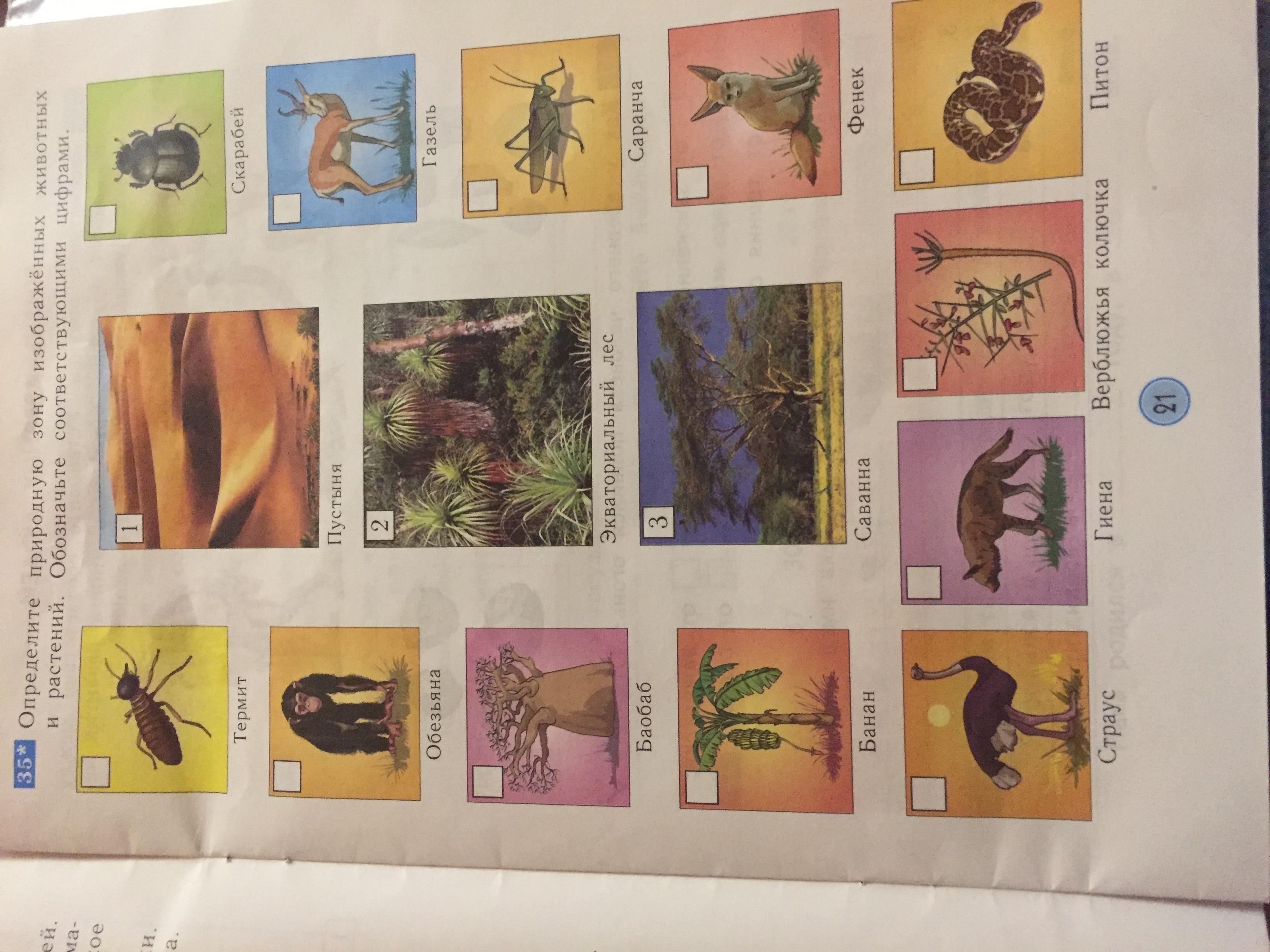 много картинки животных и растений природных зон пошли