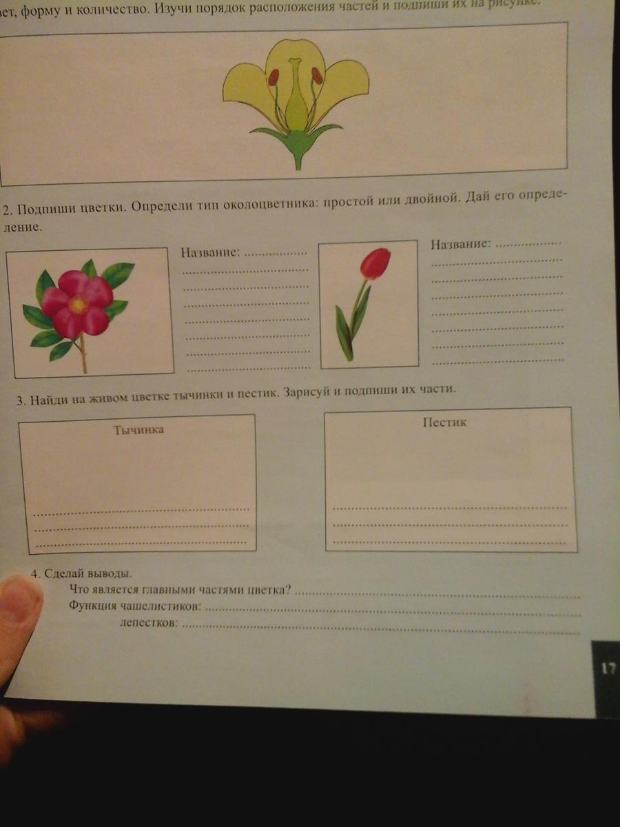 Главными частями цветка являются