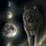 ВолчицаОдиночка