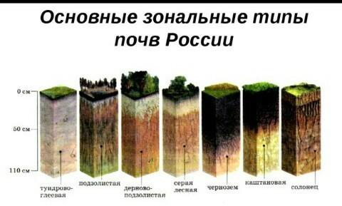 Краткий доклад на тему почва 7000