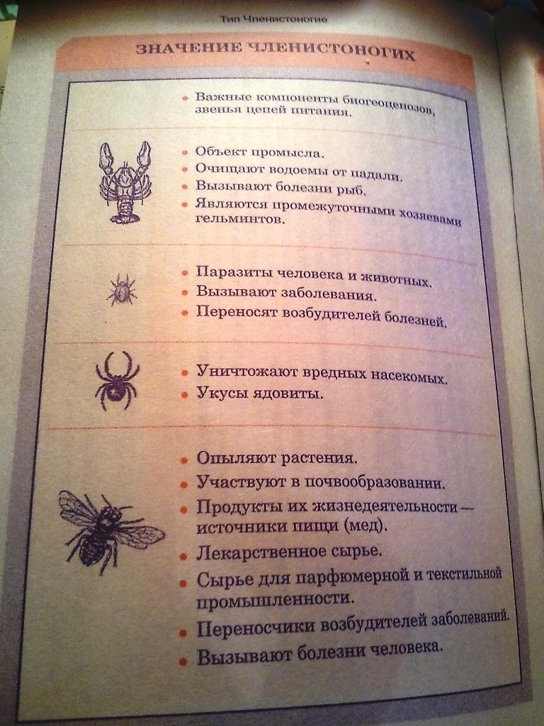 Взрослая поликлиника г. краснотурьинск