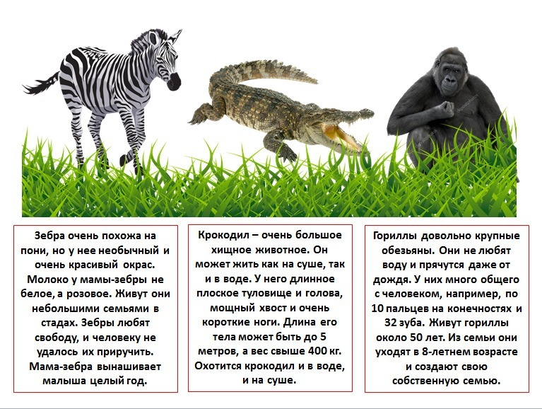 Животный мир сообщение 8 класс