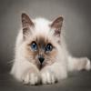 cat23453