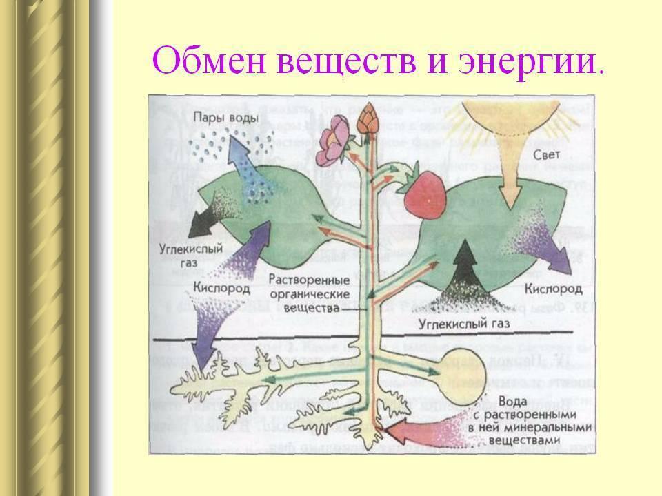 Поздравления на Иван Купала в стихах. Пожелания 961