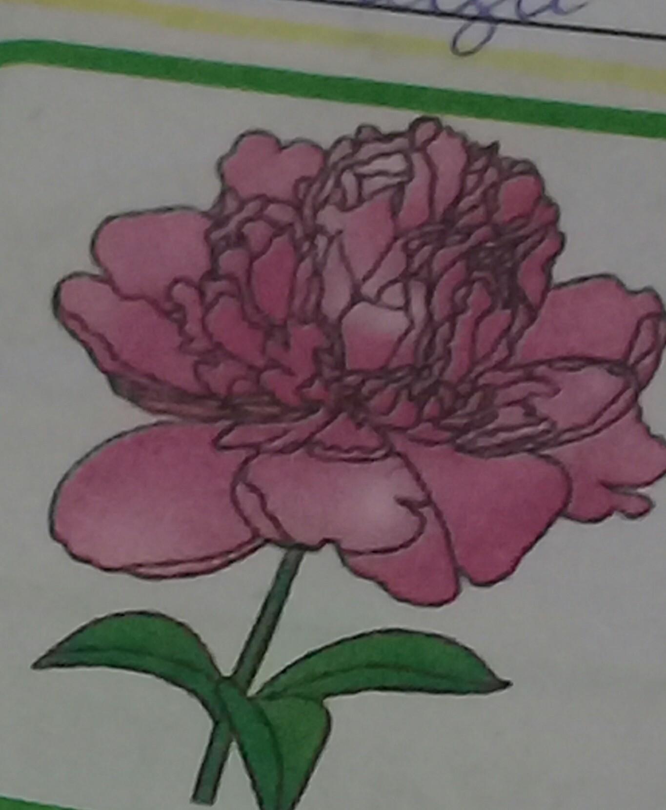 Что это за цветок ,да или нет