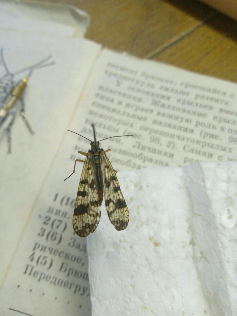 Что это за насекомое? ОБЯЗАТЕЛЬНО СКАЗАТЬ НАЗВАНИЕ