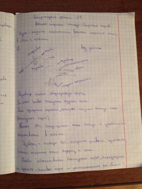 Лабораторная работа по биологии 7 класс константинов