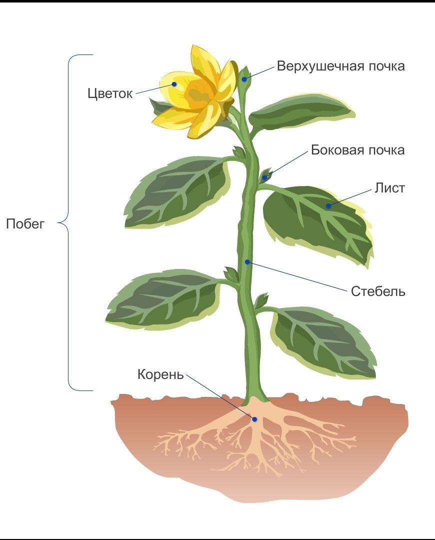 Побег лист цветок