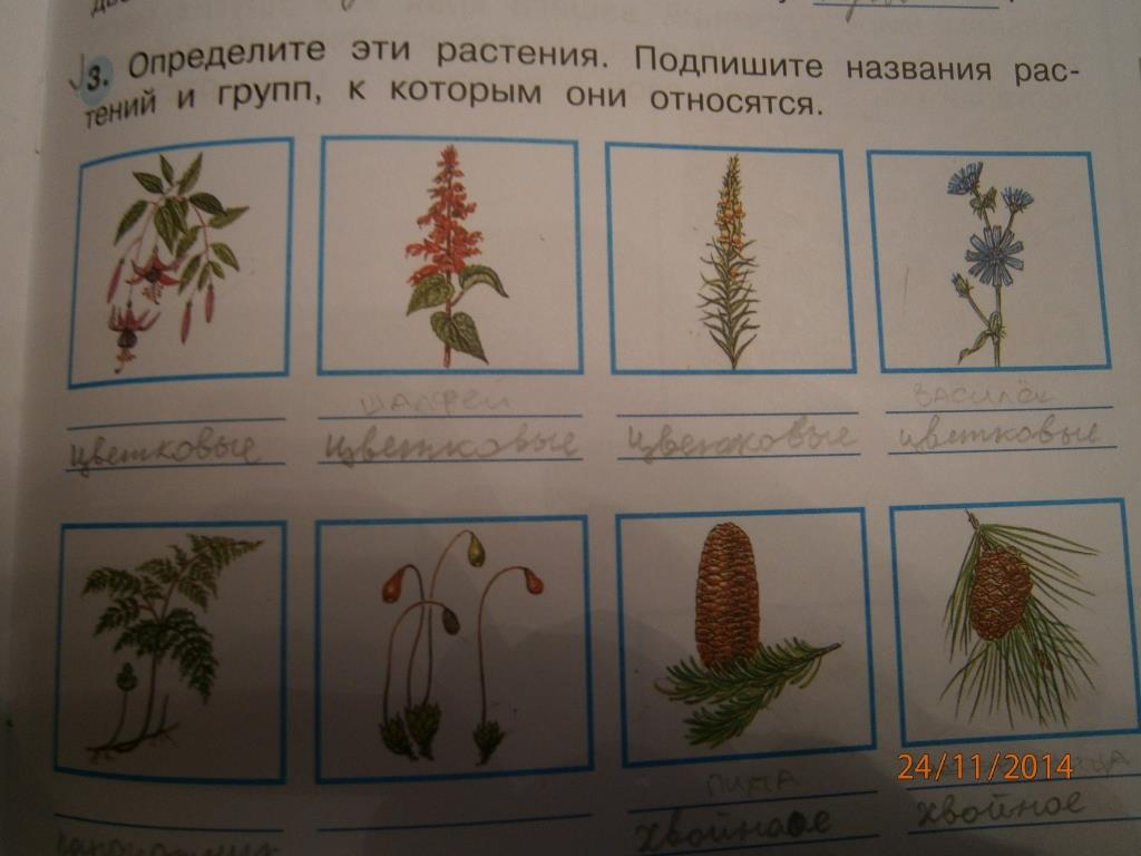 названия растения и фото
