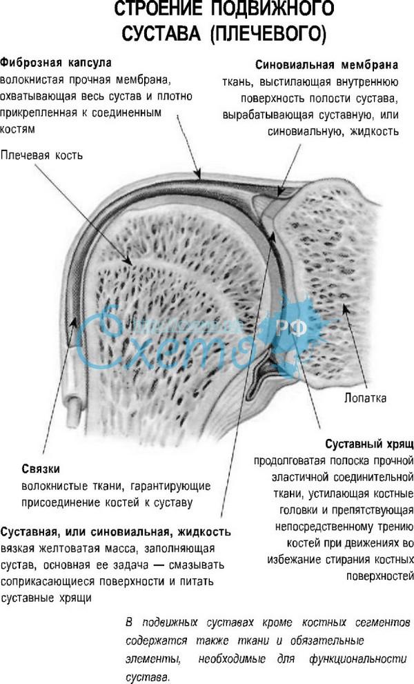 Рисунки части сустава пассивная разработка суставов аппарат